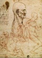 Disegno Leonardo da Vinci